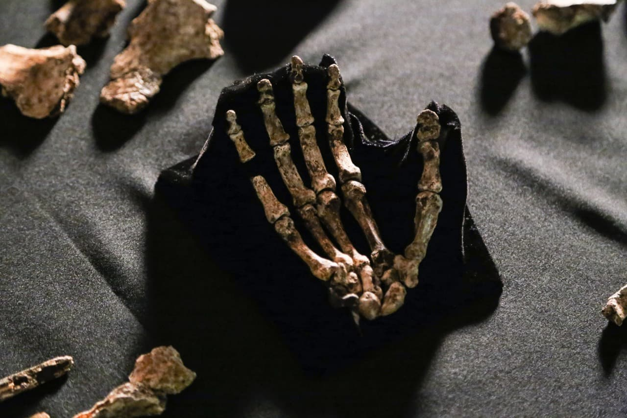 Skeletal hand of Homo Naledi