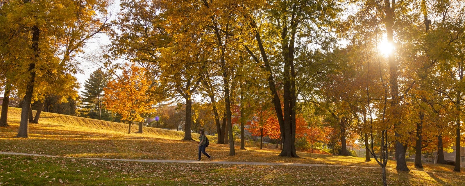A student walking on a tree-lined path next to Observatory Drive's scenic overlook is bathed in a spectacular display of autumn colors on a sunny day.