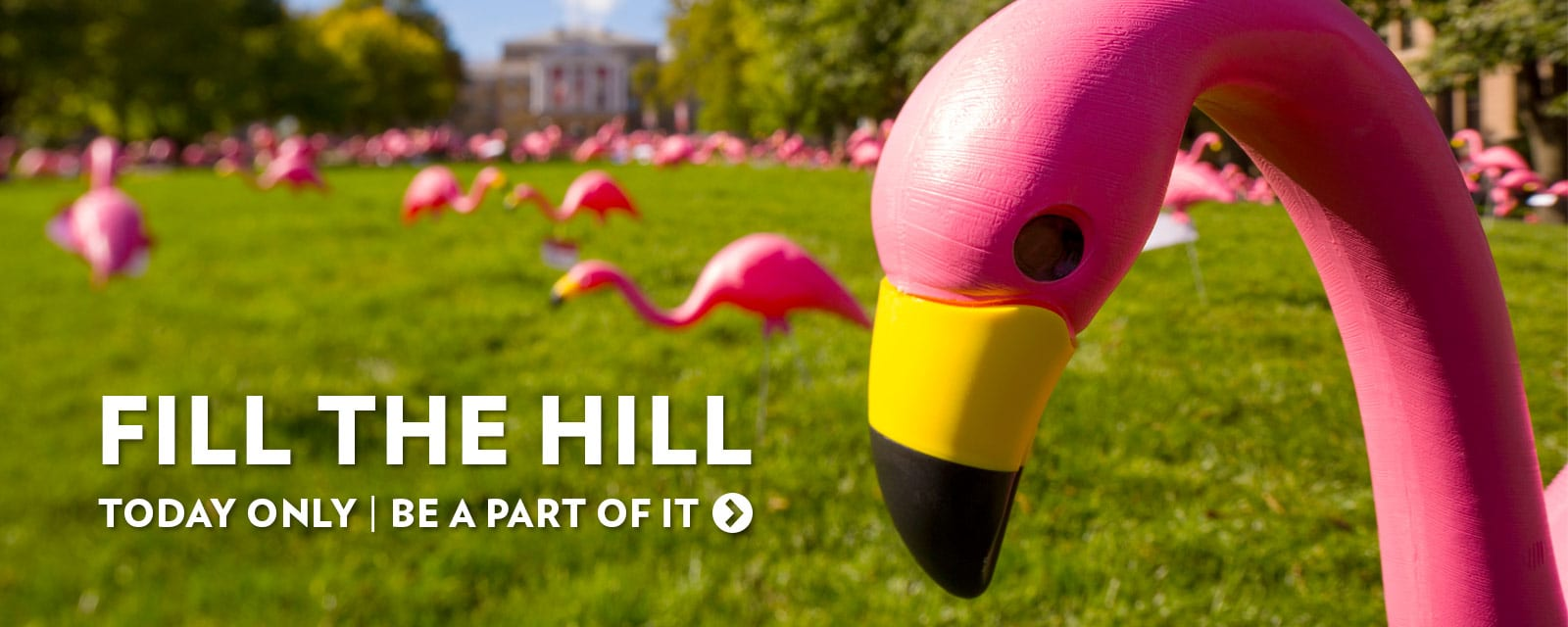 Fill the Hill, today only. Be a part of the university's annual flamingos on Bascom Hill giving event.